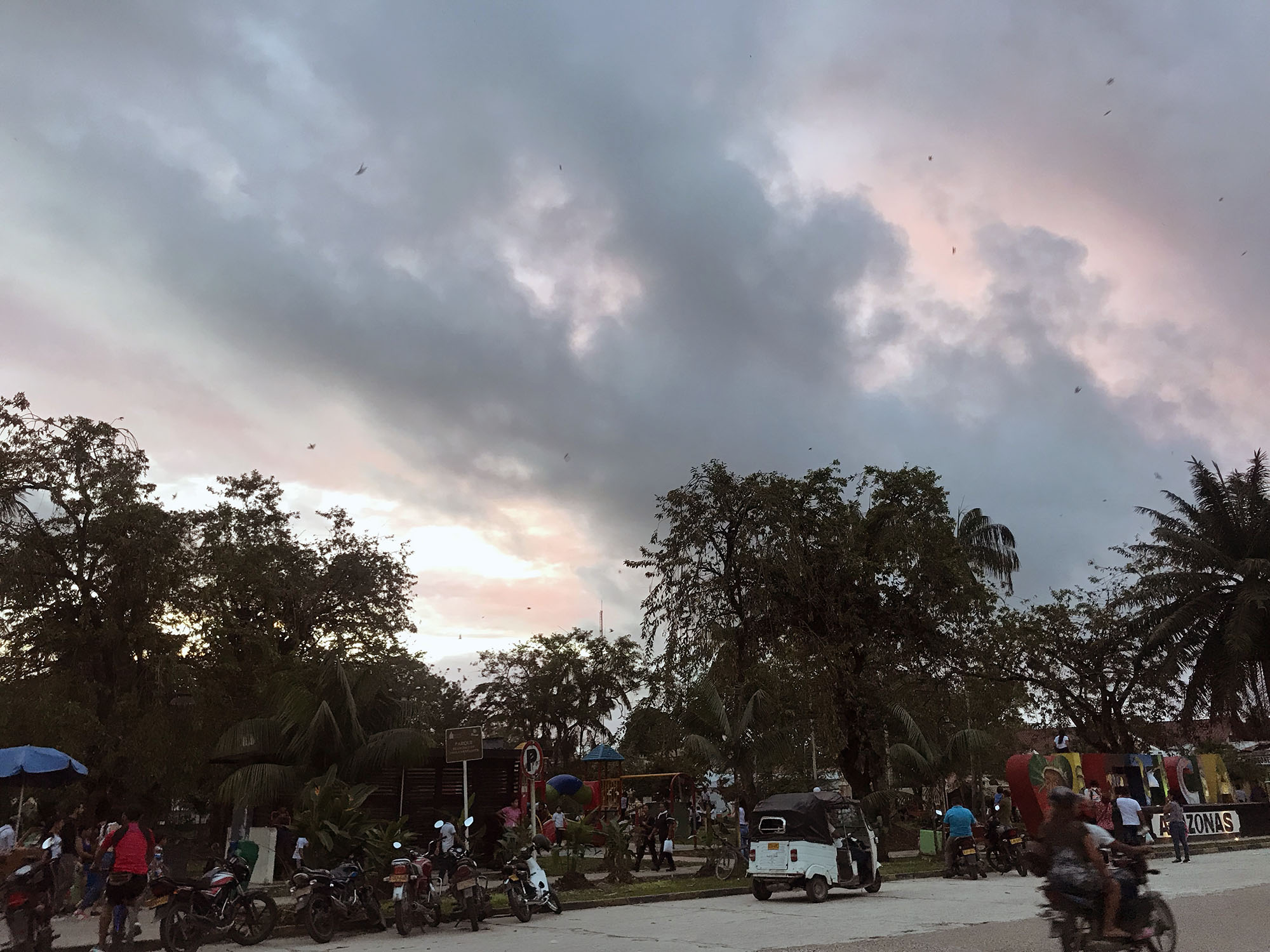 Central Park of Leticia, at dusk, filling with parrots and swallows