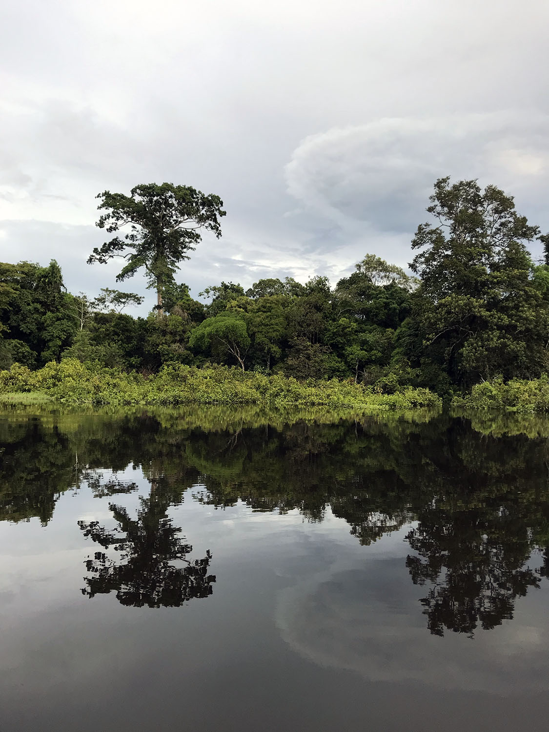 more green islands and beautiful skies reflecting on the amazon river lake